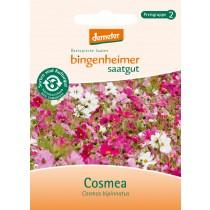 Cosmea - Blumen (Saatgut) 1 St.