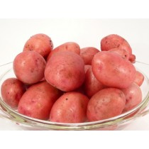 Kartoffel Alouette rot vfk.