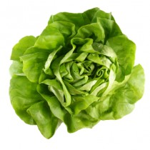 Kopfsalat - grün -