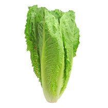 Mini-Romana-Salat
