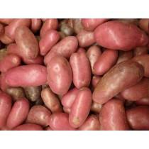 Kartoffel Rosara rot vwfk.