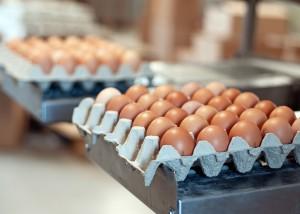 Eier 30er Lage (Birkscher Biohof) Größe M