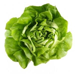 Kopfsalat - grün - ( Regional )